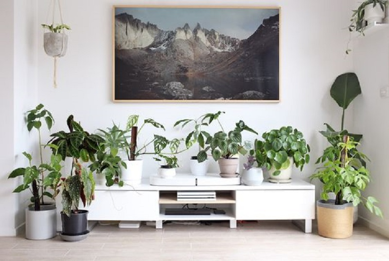 5 Amazing Tips To Create Your Own Indoor Jungle Interior Design