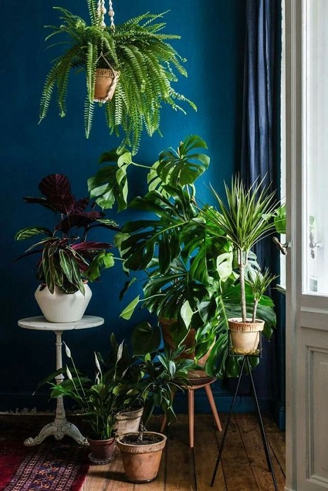 Find 20 Attracting Houseplants Decor Ideas To Beautify Your House Perfectly