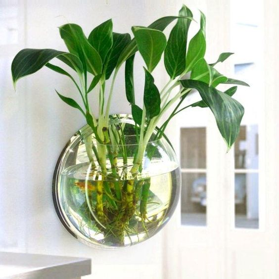 15 Smart Ideas To Decorate A Modern House Using Beautiful Hydro Plants